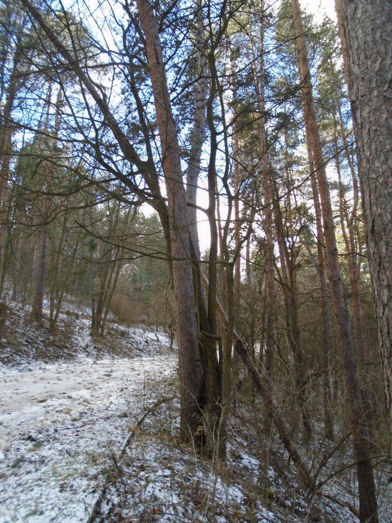 горско дърво Служители на